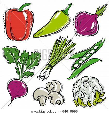 Set Of Vegetable, Pepper,onions, Beans, Vector Illustration
