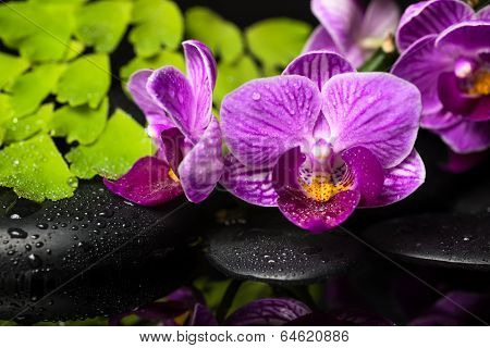 Spa Still Life Of Violet Orchid (phalaenopsis), Green Branch Of Maidenhair, Zen Stones With Drops An