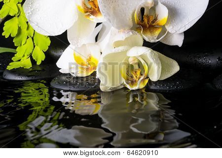 Spa Still Life Of White Orchid (phalaenopsis), Green Branch Of Maidenhair, Zen Stones With Drops And