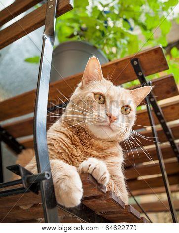 Light Ginger Tabby Cat Sitting On Chair Outside Under Table