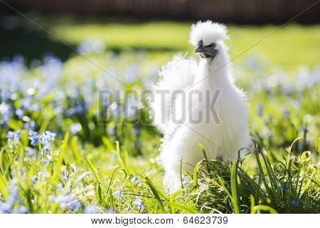 Baby Hen Hiding In The Grass