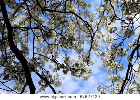 Spring has sprung...