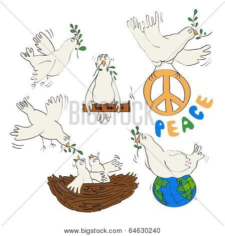 white pigeon and olive branch - symbol of peace