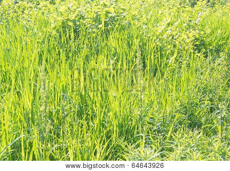 Grass That Has Overgrown In Spring