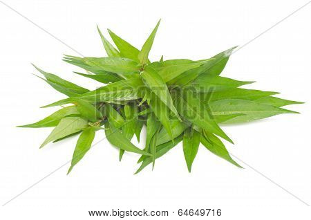 Vietnamese mint