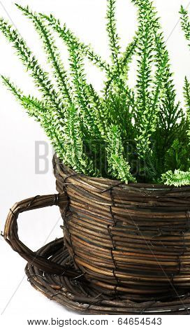 Flower Pot With Plant