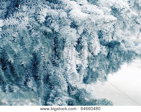 Winter weather branches with snow in the forest