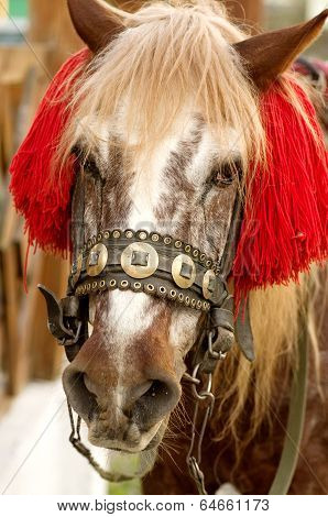 Head Chestnut horses in harness with decorations