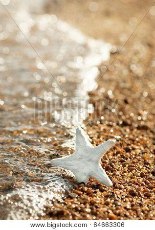 Seashell On The Coastline And Sea Water