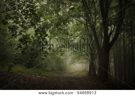 Path trough a green forest with fog