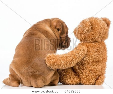 best friends - dog and teddy bear with arms around each other