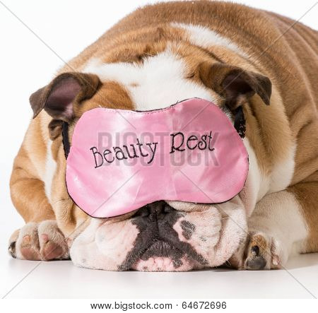 english bulldog wearing beauty rest sleeping mask