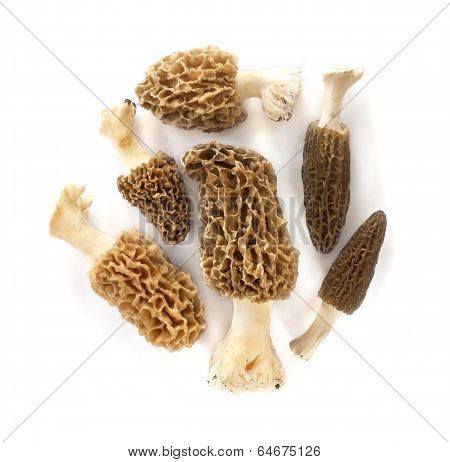 Group Of Morel Mushrooms Isolated On White Background