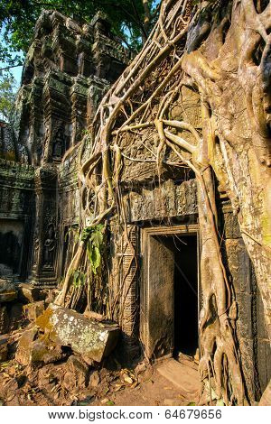 Giant tree covering stones of the ancient Ta Prohm temple at Angkor Wat complex, Siem Reap, Cambodia