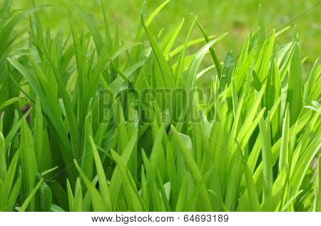 Background of Green Foliage