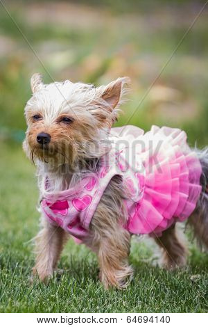 Adorable Puppy In Pink