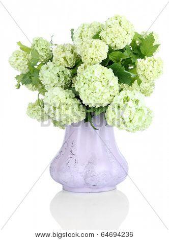 White Hydrangea in vase isolated on white
