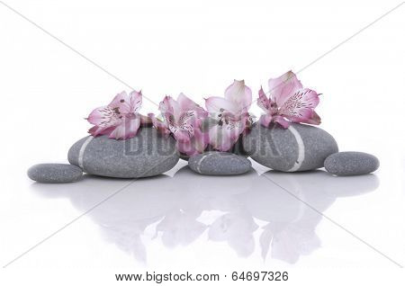 Nature stones with pink orchid