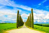 picture of senesi  - Cypress Trees rows and a white road rural landscape in val d Orcia land near Siena Tuscany Italy Europe - JPG