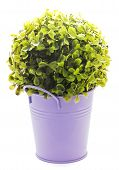 pic of lilas  - Decorative tinny planter with shiny flower on a white background. ** Note: Visible grain at 100%, best at smaller sizes - JPG