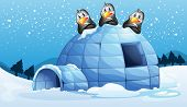 stock photo of igloo  - Illustration of the three penguins above the igloo - JPG