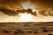 stock photo of oman  - Sunset in desert Wahiba in Oman with riding tourist group on camels - JPG