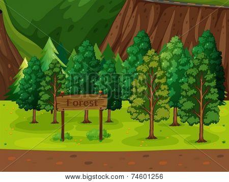Illustration of a beautiful forest