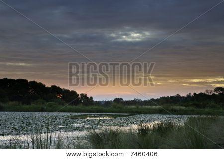 Sunset On African Pond