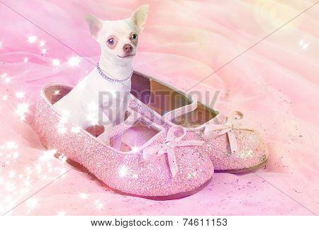 Chihuahua Dog In Pink Glittery Shoe