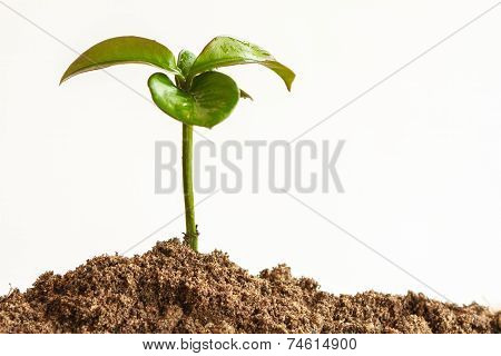 Seedling Plant With Black Earth