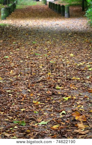 Path In The Park, Strewn With Leaves
