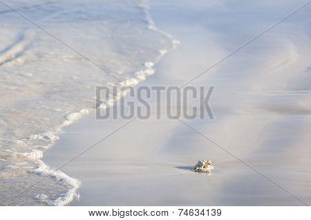 White Beach Detail, Kenya