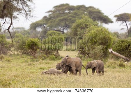 Baby Elephants, Kenya