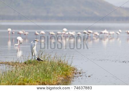 Birds At Lake Nakuru, Kenya
