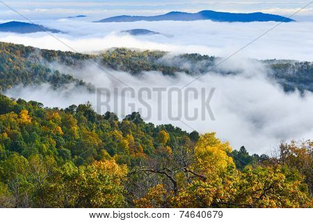 Foliage of Autumn forest in Shenandoah National Park in Virginia, United States