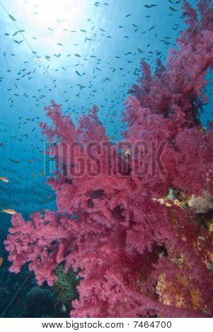 Vibrant Soft Corals