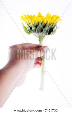 Giving Flower