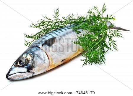 Fresh Mackerel Fish With Dill