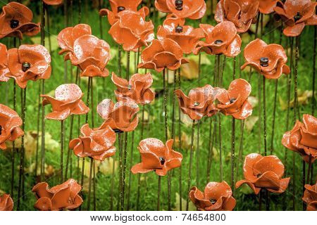 Rain Stained WWII Poppies