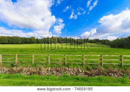 Countryside View Of Green Field. Nature Landscape