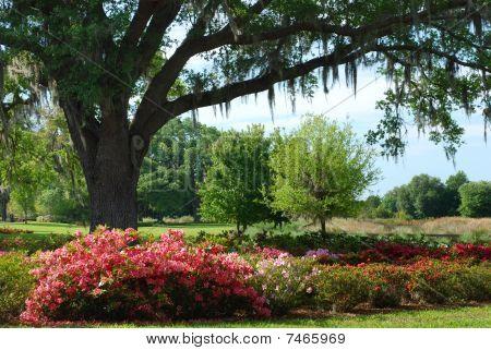 Azalea Landscape
