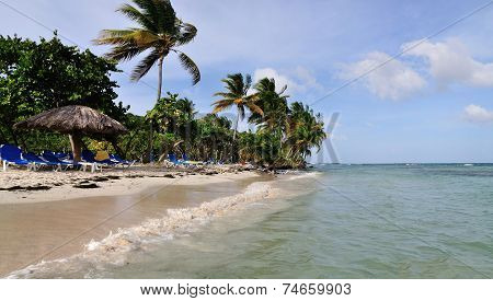 Palm Tree Filled Beach