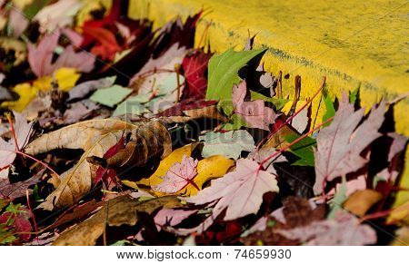 Colorful Heap Of Maple Leaves Formed By Yellow Road Curb