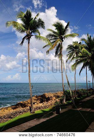 Palm Trees In El Condado