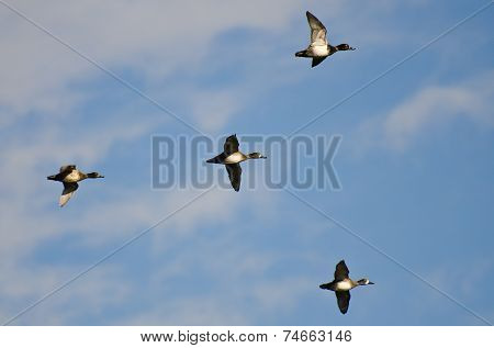 Flock Of Ring-necked Ducks Flying In A Cloudy Sky