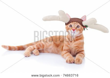 A funny red nose reindeer cat for Christmas