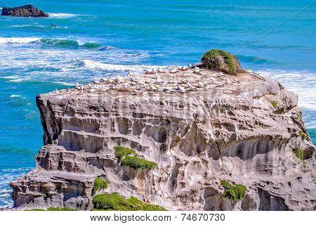 Gannet habitat