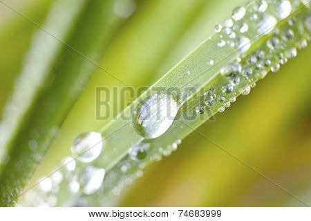 Detail Of Dew On A Blade Of Grass