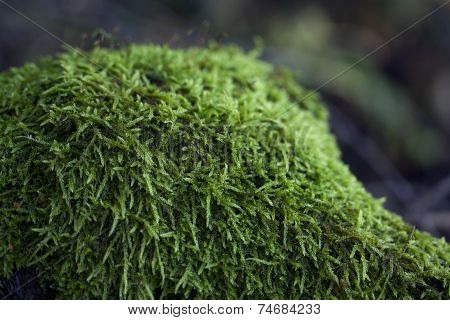 Magic Autumn Moss In The Forest