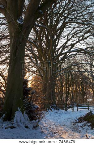 Trail Through Snowy Woodland